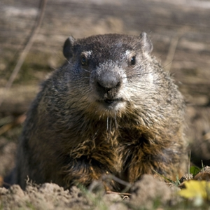 "Two Vermont companies are engaged in a court battle over the right to use ""Woodchuck"" in their names."